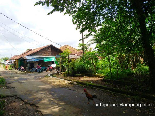 Dijual Tanah Murah di bypass raya Rajabasa